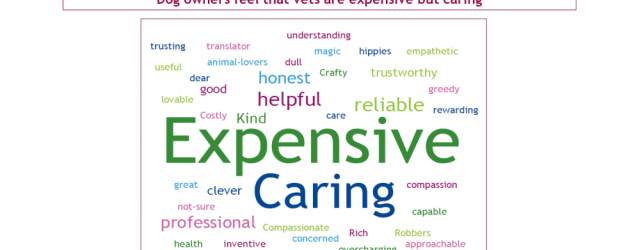 Veterinary Market Research word cloud showing pet owner adjectives to describe their vet