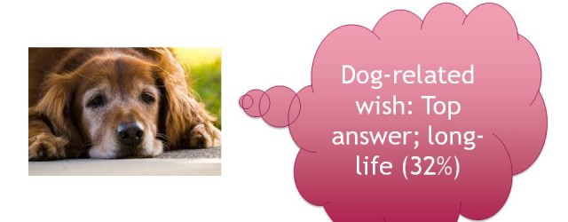 MG&A: Veterinary Market Research - If I could wave a magic wand, what ONE PET-RELATED wish would you like to come true?