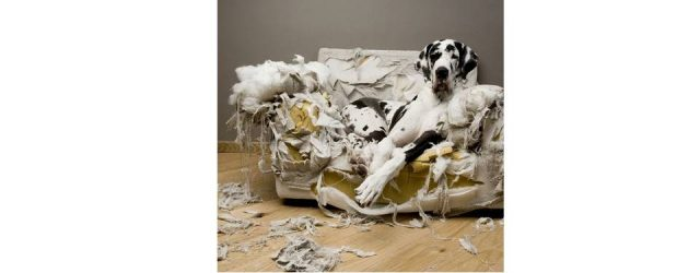 MG&A Veterinary market research: How anti-social is your dog?