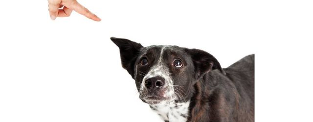 MG&A Veterinary Market Research: Has your dog ever disgraced you in public?